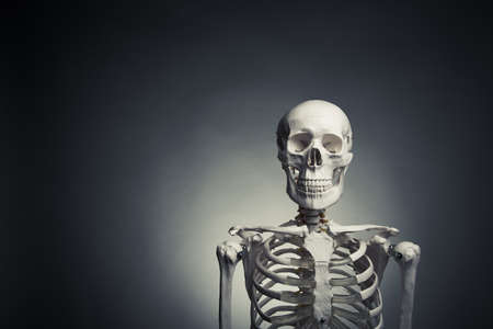 medical skeleton model with dramatic light Stock Photo - 15374479