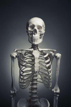 vintage anatomy: medical skeleton model with dramatic light Stock Photo