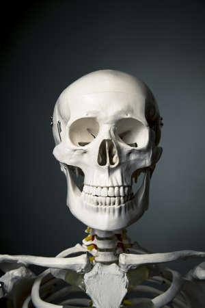 medical skeleton model with dramatic light Stock Photo - 15385057