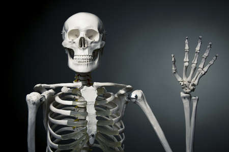 medical skeleton model with dramatic light Stock Photo