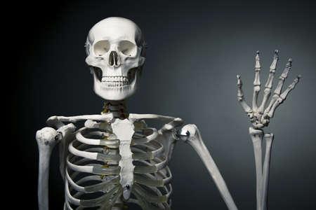 halloween skeleton: medical skeleton model with dramatic light Stock Photo