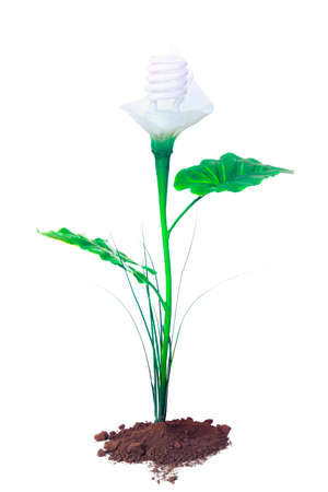 earth friendly: Ecological concept, earth friendly light bulb plants isolated on white