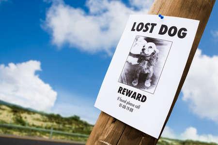 perrito: perdido poster cachorro en un poste de luz Foto de archivo