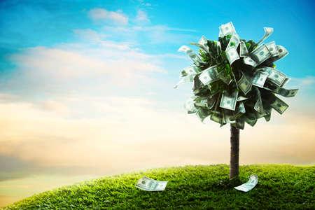 foto del árbol hecho de dólares