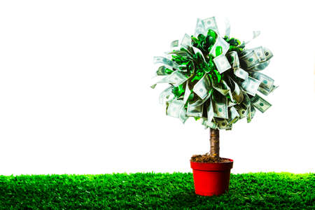 money tree: photo of tree made of dollars isolated on white Stock Photo