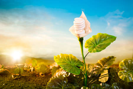 Ecological concept, earth friendly light bulb plant at sunset photo