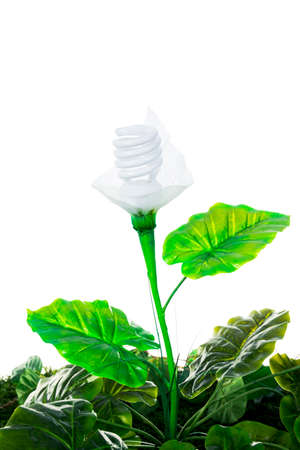 earth friendly: Ecological concept, earth friendly light bulb plant isolated on white Stock Photo