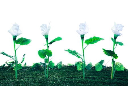 Ecological concept, earth friendly light bulb plants isolated on white