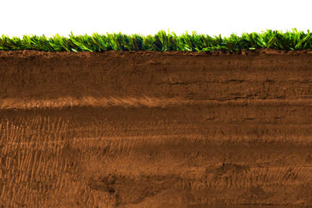 Cross section of grass on soil