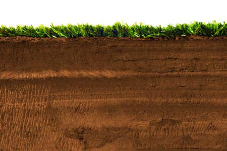 Sección transversal de la hierba en el suelo Foto de archivo - 28046908