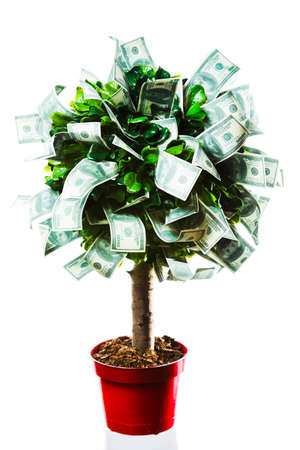 photo of tree made of dollars isolated on white photo