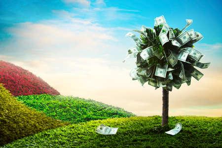 Foto von Baum-Dollar gemacht