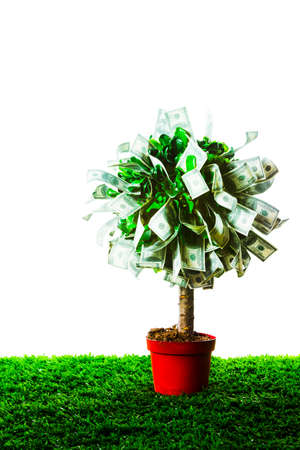 photo of tree made of dollars isolated on white Stock fotó