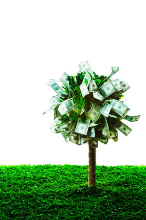 photo of tree made of dollars isolated on white photo