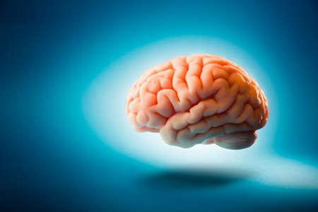 neuron: Cerebro humano flotando en un fondo azul Foto de archivo