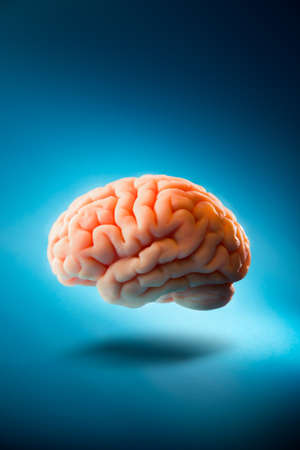 Human brain floating on a blue background