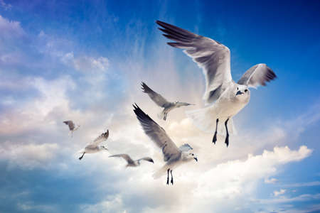 bird flying: several seagulls flying in a cloudy sky Stock Photo
