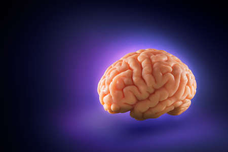 human brain: Human brain floating on a purple background