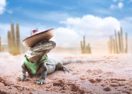 """Mexicaanse hoed """"sombrero"""" op een """"serape"""" in een Mexicaanse woestijn 's nachts"""