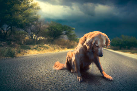 abandoned dog in the middle of the road / high contrast image 스톡 콘텐츠