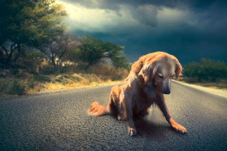 vagabundos: perro abandonado en el medio de la imagen de ruta  alto contraste