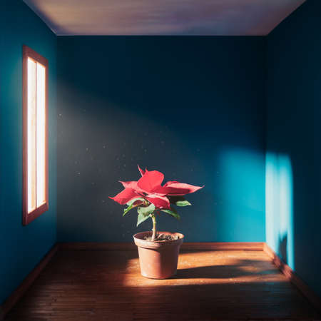 star: poinsettia flower in a square room