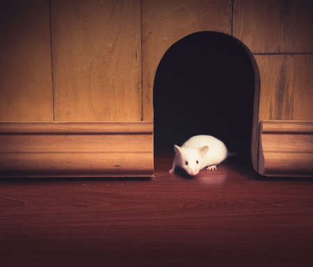mouse: little mouse coming out of its hole