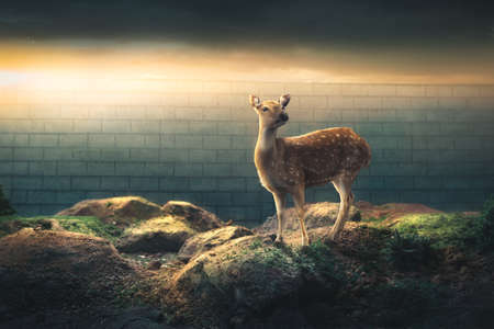 deer on the other side of a border wall