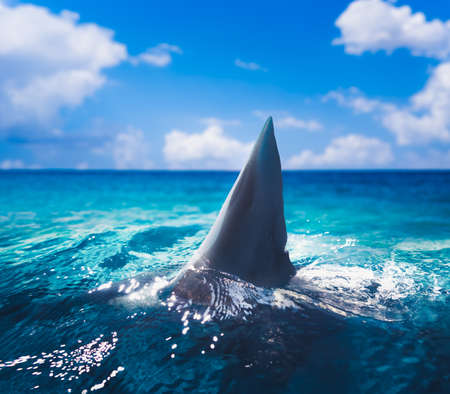 Great white shark fin above water  3d illustration  mixed media