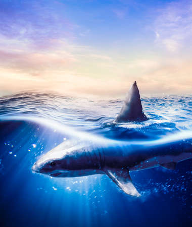 Great white shark swimming underwater with light rays  3d illustration  mixed media