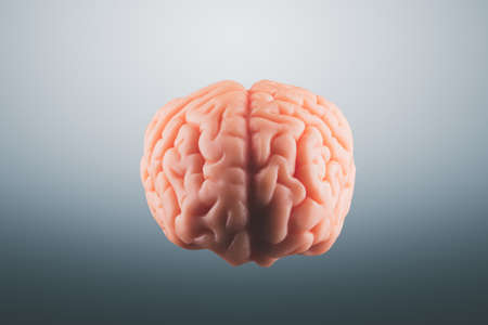 Human brain floating on a gray background Stock Photo