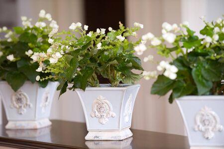 Mooie bloemen in potten
