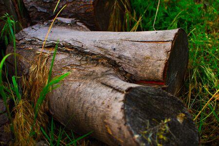 Wood stump close up Stock Photo