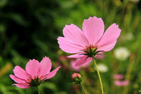 eudicots: Photographed in the city park in Moscow Stock Photo