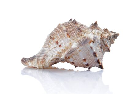 beautiful color of sea shell on white background photo