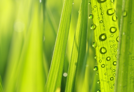 close up of nature fresh green grass with dews drop photo