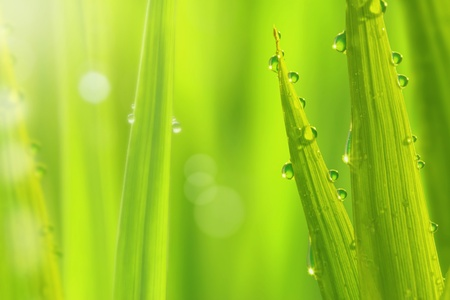 close up of fresh green grass with dews drop Stock Photo - 20565599