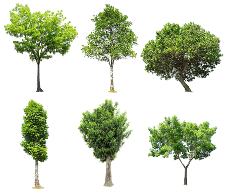 collection of tree isolated on white background Stock Photo