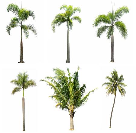 verzameling van de boom op een witte achtergrond