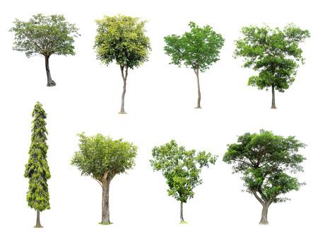 나무의 컬렉션은 흰색 배경에 고립