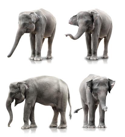 birretes: conjunto de elefante aislado más de fondo blanco