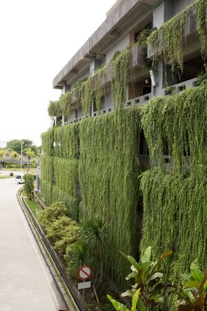 green building: A portrait of decorative hanging garden on the more than one stories building. green building concept