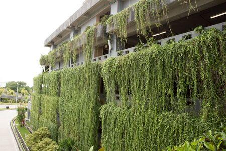 bioedilizia: Un ritratto di decorativo giardino pensile sulla costruzione pi� storie. concetto di bioedilizia