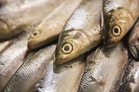 exhibidor: Un retrato de sardinas frescas crudas en puesto en el mercado