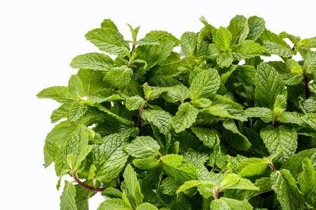 leaf close up: portrait of mint leaf close up on white background