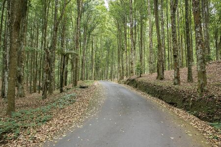 ecosistema: Un retrato de camino rural rodeado de árboles