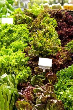 escarola: portrait of fresh green and red kale at supermarket display