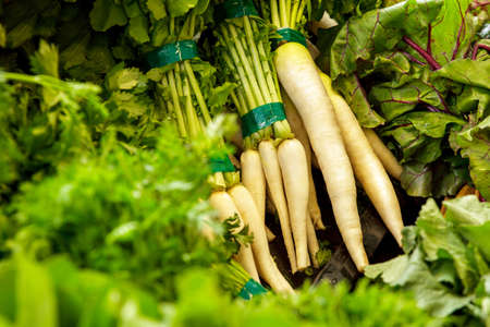 selective focus: selective focus portrait of fresh white radish with leaves at grocery Stock Photo