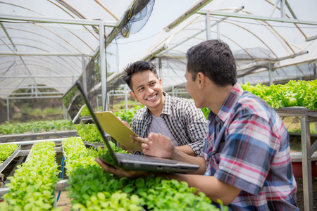 farmer using laptop while working in hydrophonic farm