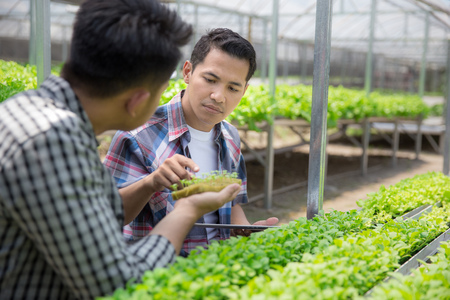 two farmer team looking at young plant in hydrophonic farm. modern farming concept Stock Photo